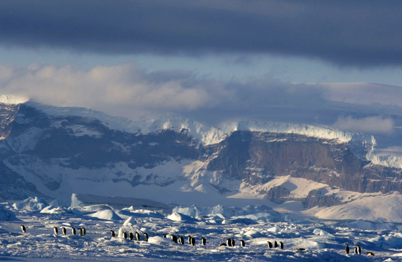 Die Reise der Pinguine 2 - Bild Nr. 4