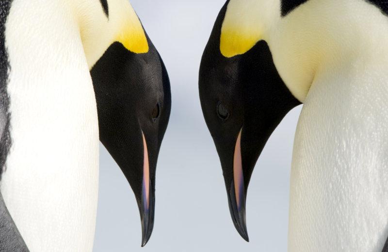 Die Reise der Pinguine 2 - Bild Nr. 14