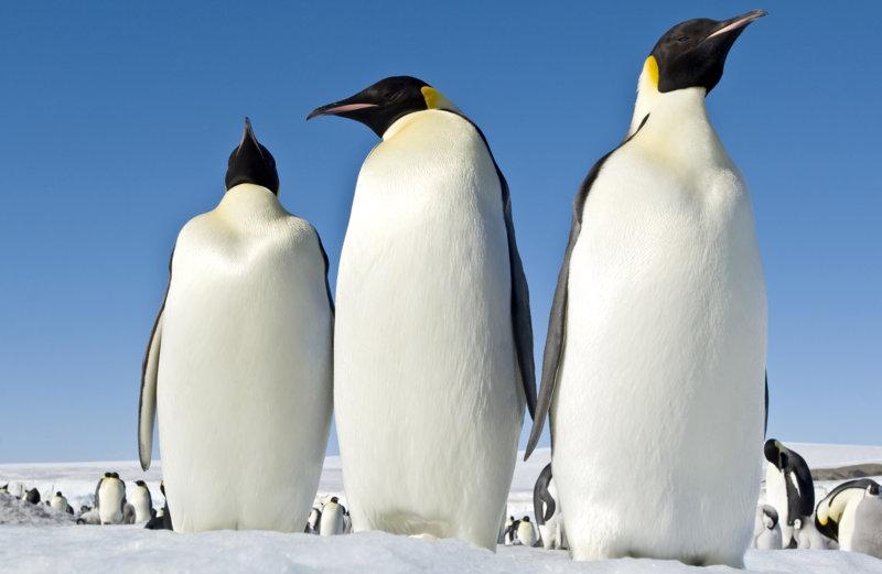 Die Reise der Pinguine 2 - Bild Nr. 13