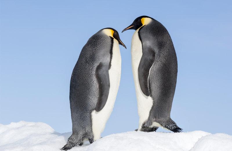 Die Reise der Pinguine 2 - Bild Nr. 16