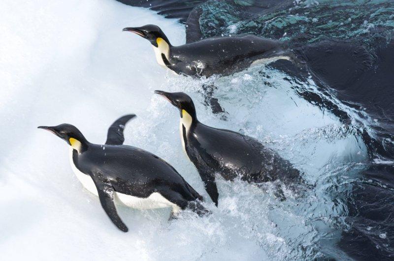 Die Reise der Pinguine 2 - Bild Nr. 2