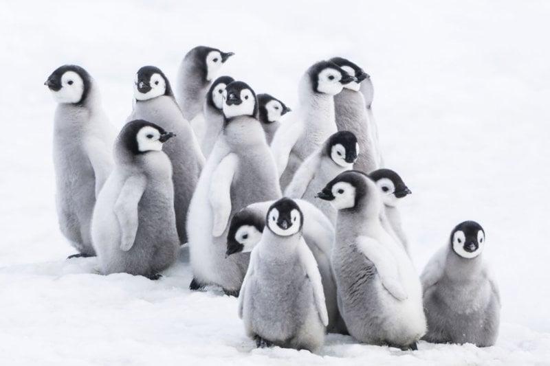 Die Reise der Pinguine 2 - Bild Nr. 1