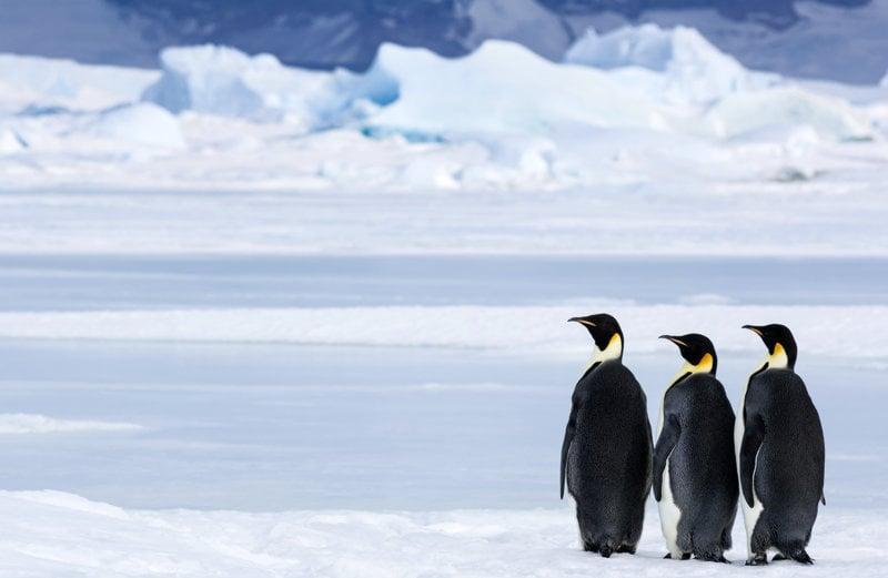 Die Reise der Pinguine 2 - Bild Nr. 6