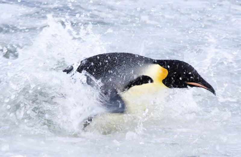 Die Reise der Pinguine 2 - Bild Nr. 18