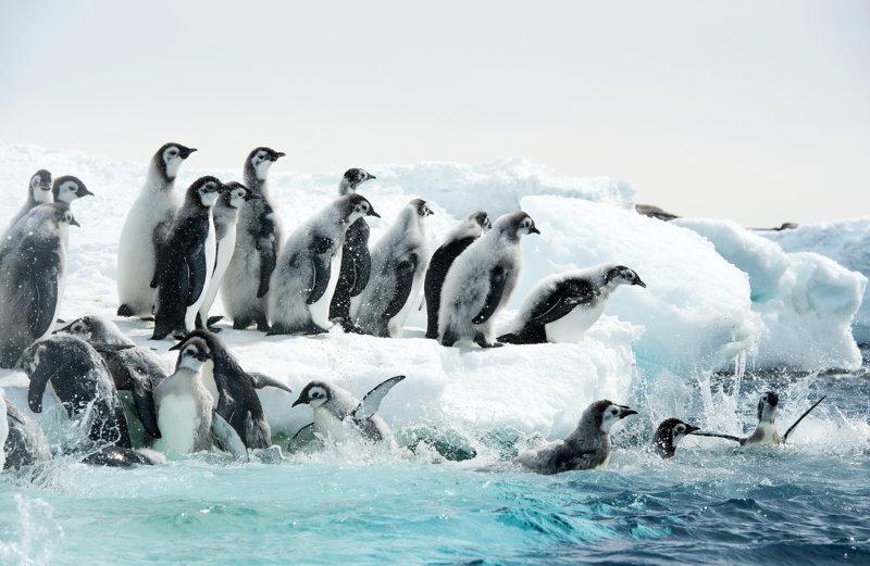 Die Reise der Pinguine 2 - Bild Nr. 22