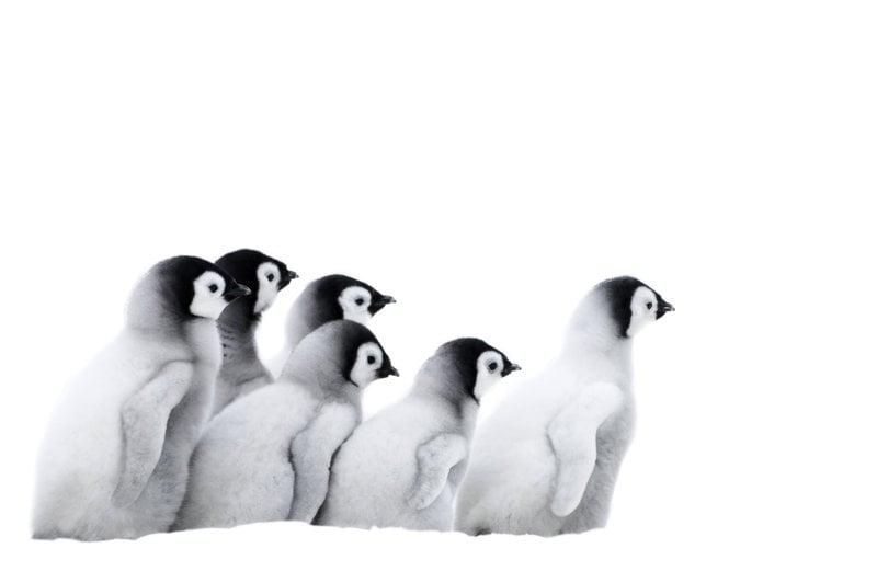 Die Reise der Pinguine 2 - Bild Nr. 8