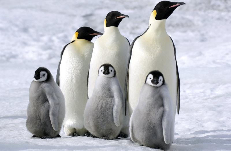 Die Reise der Pinguine 2 - Bild Nr. 5