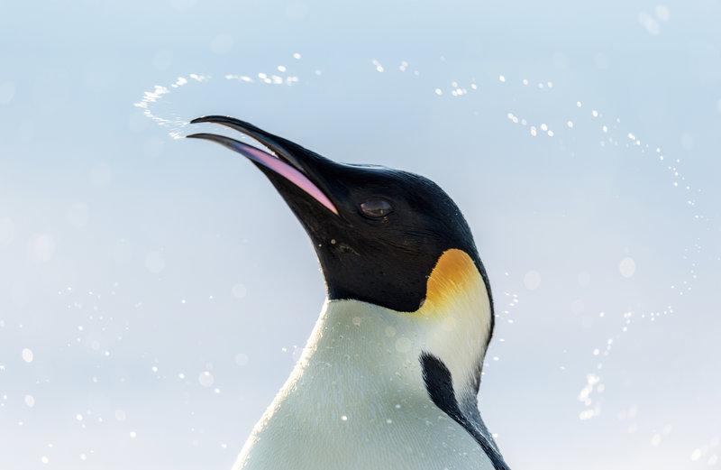 Die Reise der Pinguine 2 - Bild Nr. 25
