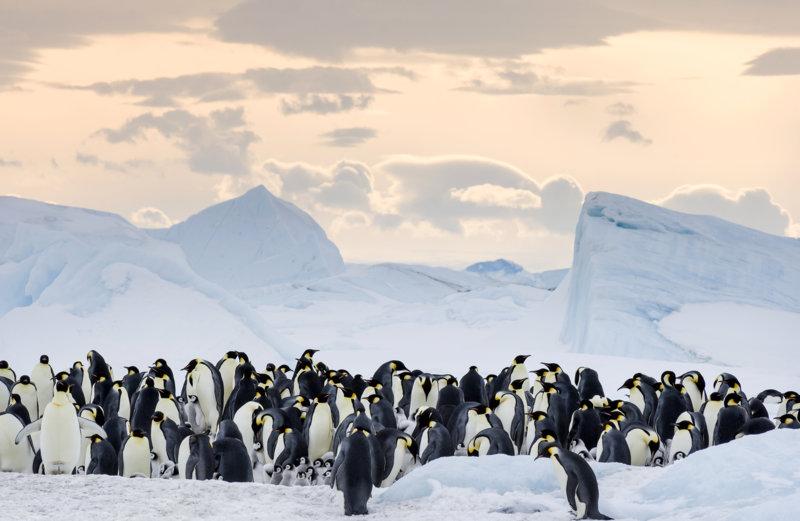 Die Reise der Pinguine 2 - Bild Nr. 20