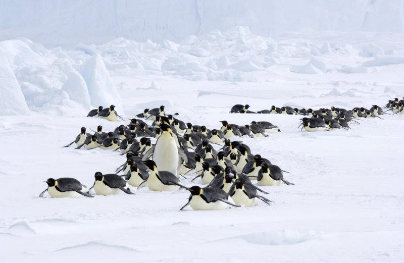 Die Reise der Pinguine 2 - Bild Nr. 15