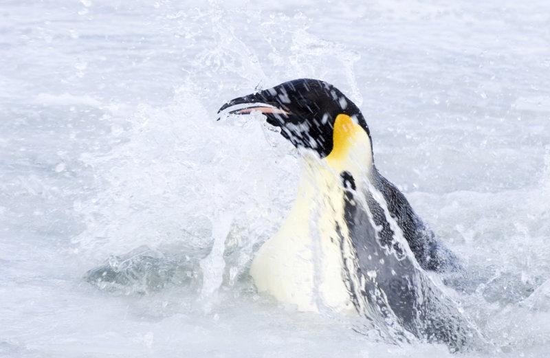 Die Reise der Pinguine 2 - Bild Nr. 17