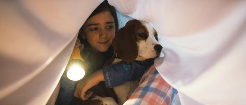 Bailey – Ein Hund kehrt zurück - Bild Nr. 12