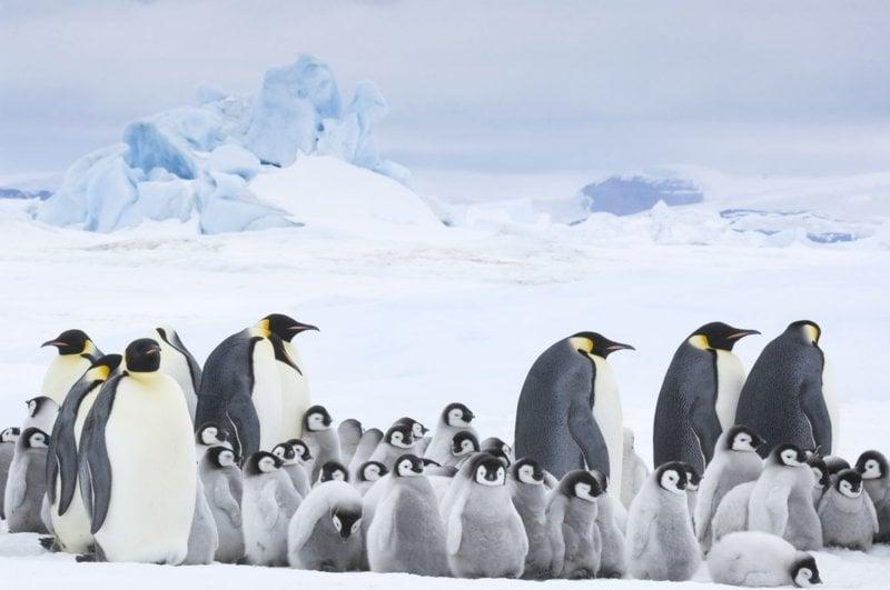 Die Reise der Pinguine 2 - Bild Nr. 3
