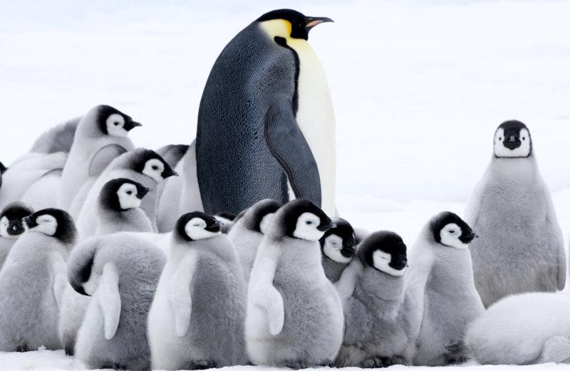 Die Reise der Pinguine 2 - Bild Nr. 11