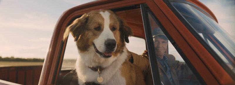 Bailey – Ein Hund kehrt zurück - Bild Nr. 1