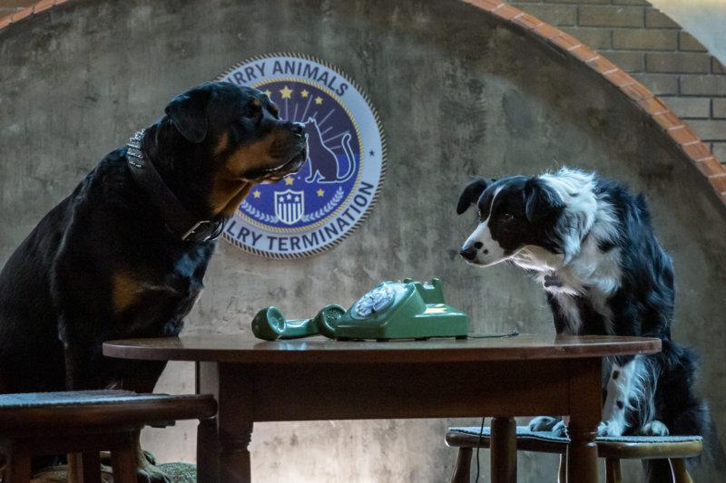 Cats & Dogs 3: Pfoten vereint! - Bild Nr. 3