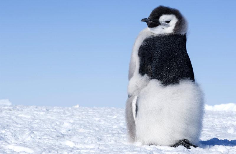 Die Reise der Pinguine 2 - Bild Nr. 21