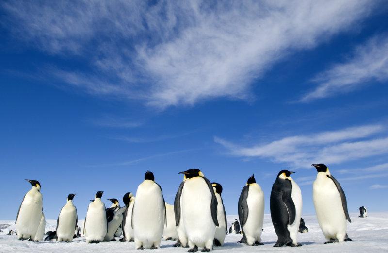 Die Reise der Pinguine 2 - Bild Nr. 7