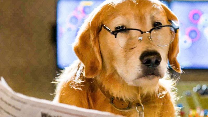 Cats & Dogs 3: Pfoten vereint! - Bild Nr. 2