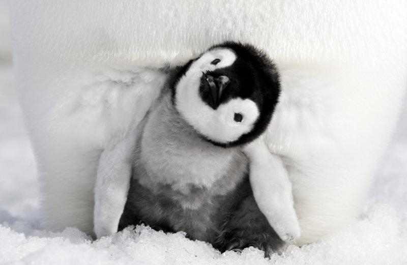 Die Reise der Pinguine 2 - Bild Nr. 10