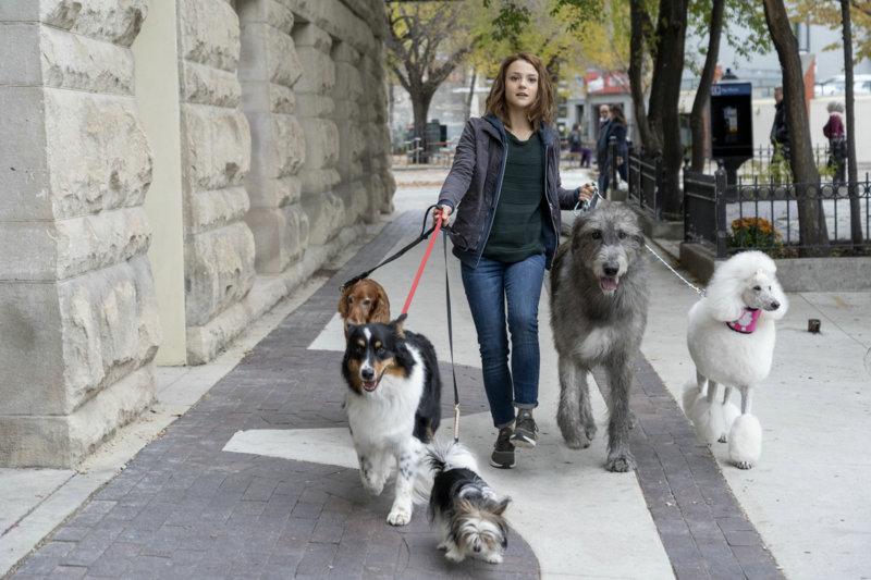 Bailey – Ein Hund kehrt zurück - Bild Nr. 13