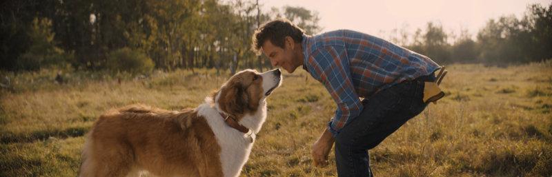 Bailey – Ein Hund kehrt zurück - Bild Nr. 2